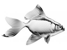 fish skin transplant