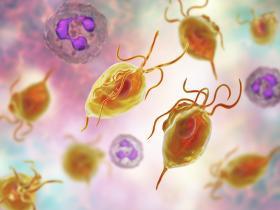 Trichomonas parasites