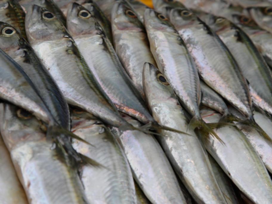 mackerel - source of omega-3