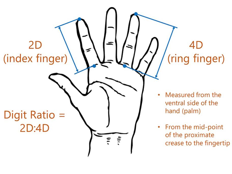 2D:4D ratio