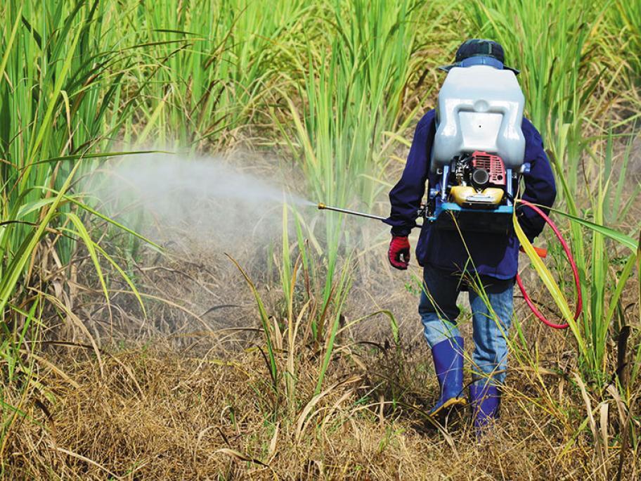 Sugarcane pesticide