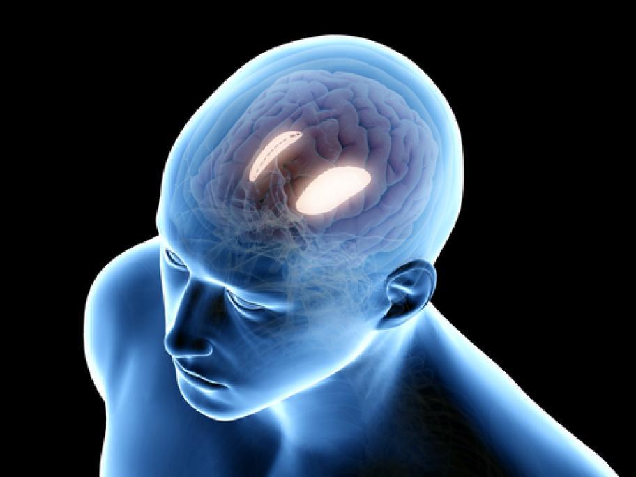 illustration of the brain showing the putamen