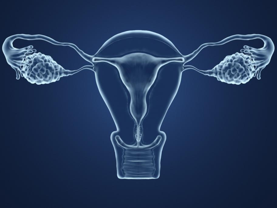 uterus and ovaries