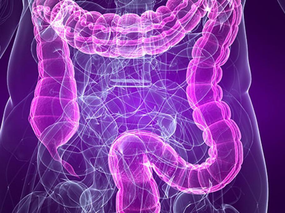 colon and bowel