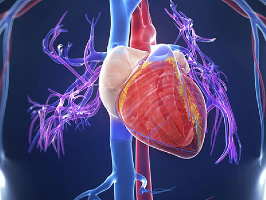 cardiology heart concept
