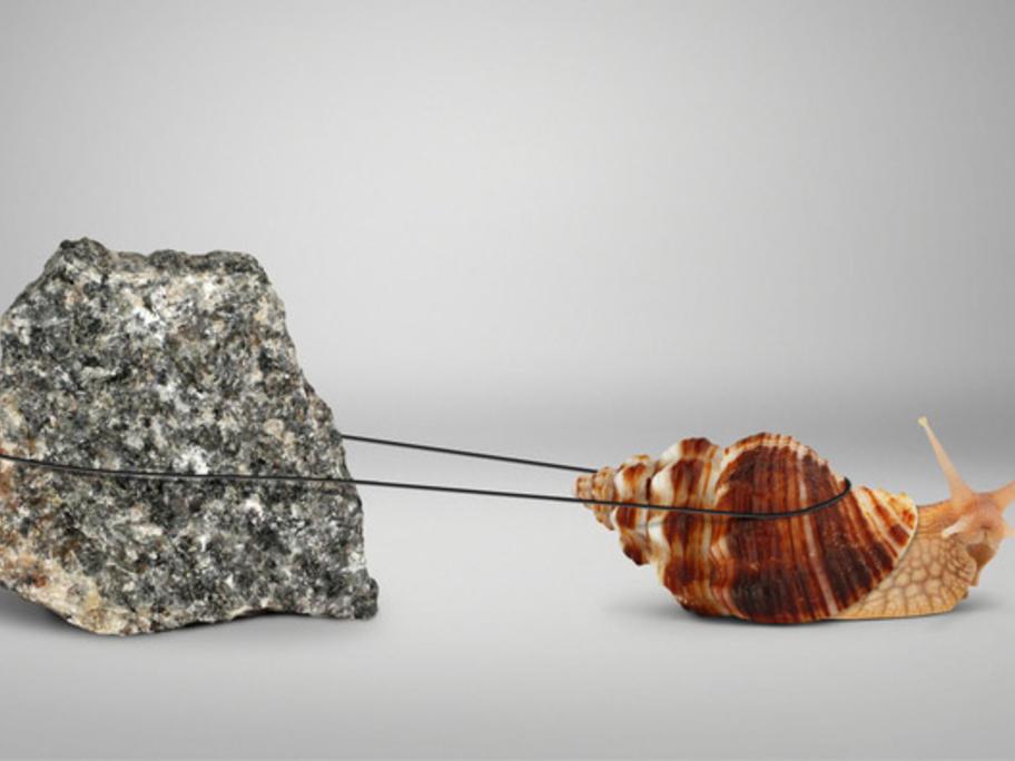 snail dragging a rock